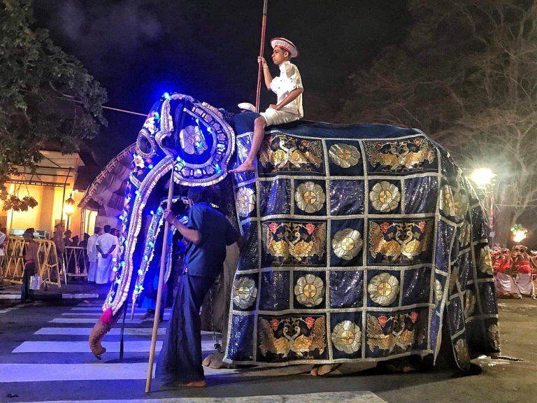 Mengenal Tikiri Si Gajah Kurus Yang Viral di Sri Lanka